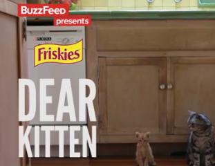 dear kitten, friskies, brand video, buzzed